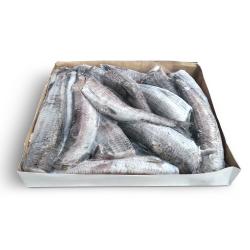 Аргентина рыба без головы