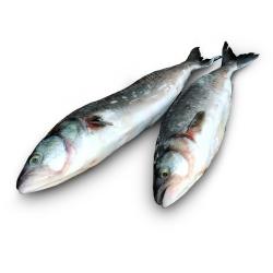 Австралийский лосось (кахавай) 1-3 кг